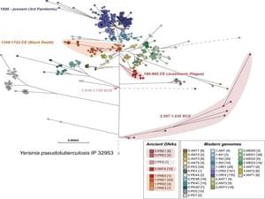 疫病、古遺伝学が明らかにする、歴史学の境界 :: リー・モルデカイ (イズラエル)、マール・アイセンベルグ(米国)