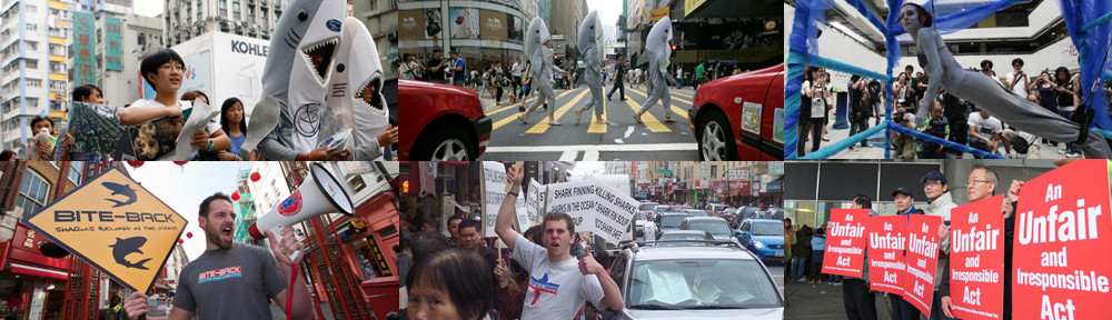 Coup for Shark's Fin Soup