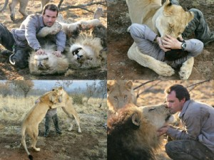 Richardson interacting with the lions he has raised. Image from: http://www.dogonews.com/2010/10/18/kevin-richardson-aka-lion-whisperer