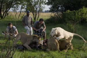 Richardson with film crew, filming the lions. Image Source.