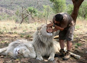 Richardson with Thor and another white lion. Image Source.