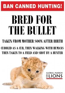 A poster against petting the cubs. Image Source.