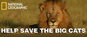 A poster on saving the lions. Image Source.