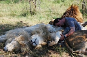 Richardson sleeping with his lions. Image Source.