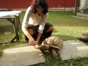 turtle 2