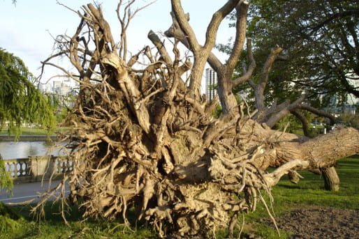 Tree failure
