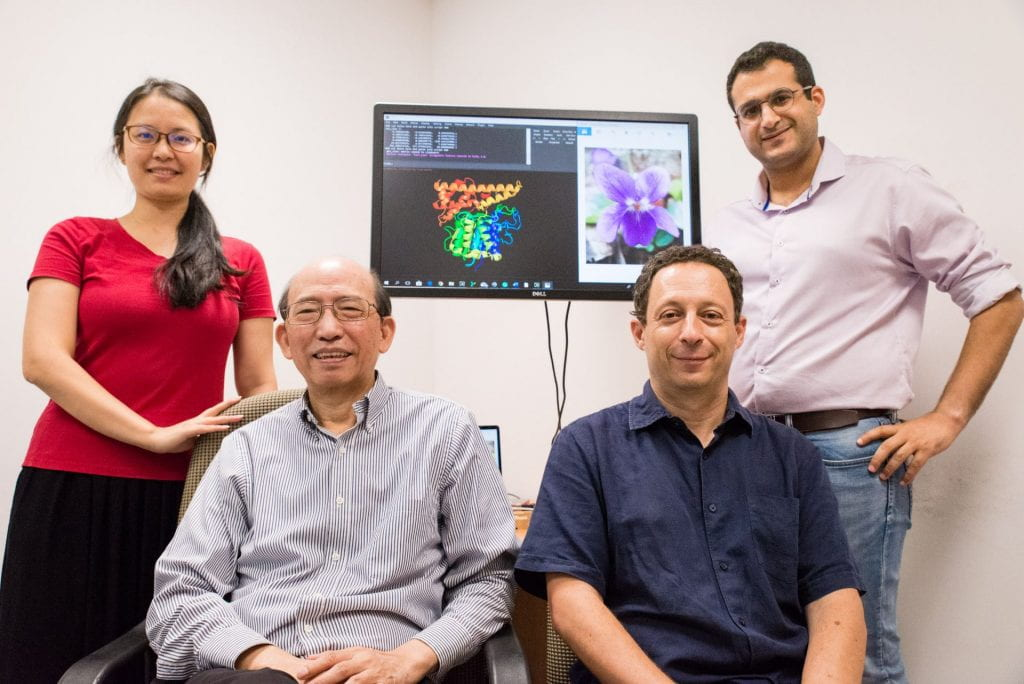 ​NTU Singapore scientists uncover binding secret behind protein 'superglue'