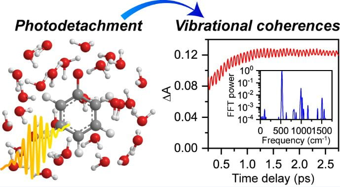 Watching a molecule dance: Ultrafast Structural Rearrangement Dynamics Induced by the Photodetachment of Phenoxide in Aqueous Solution