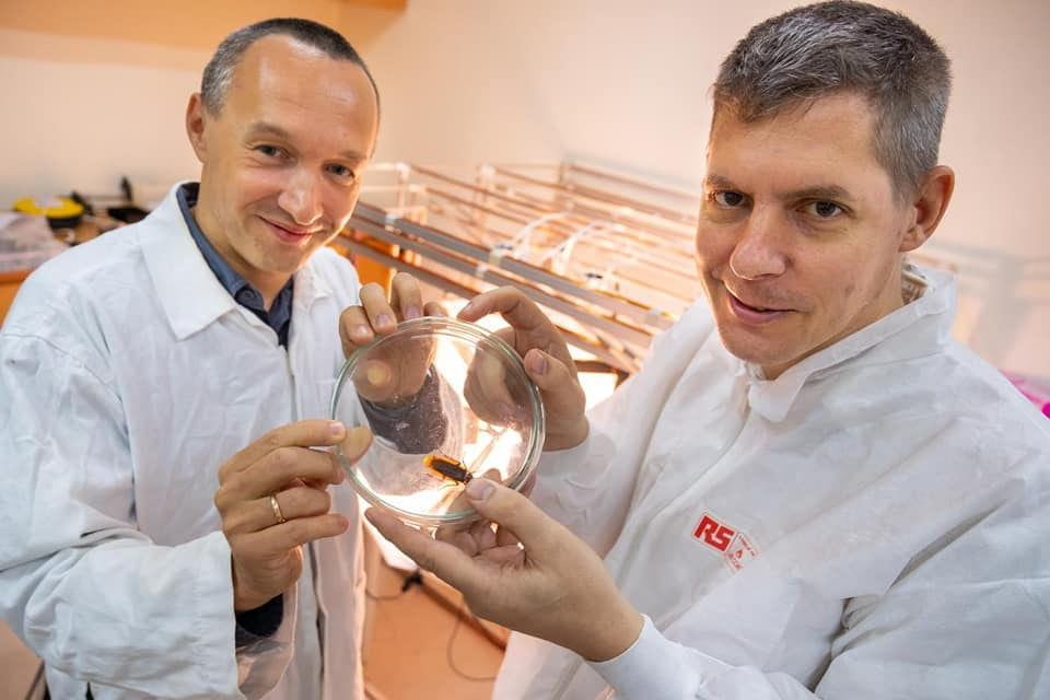 NTU Singapore researchers disprove idea that cockroaches use magnetic particles for navigation, earning them the 2019 Ig Nobel Prize