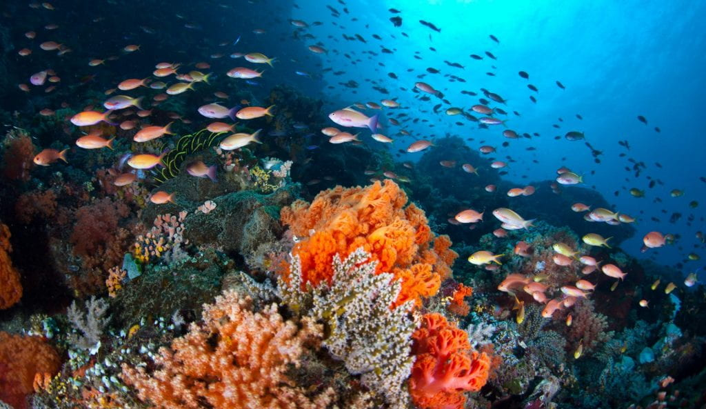 Key to corals' bleaching susceptibility lies in their diet