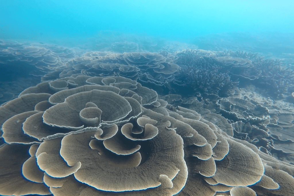 Lights out for muddy water coral reefs as global sea level rises?