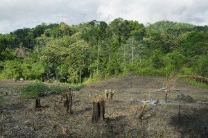 Rainforest clearing for slash and burn agriculture in central Sulawesi, Indonesia.