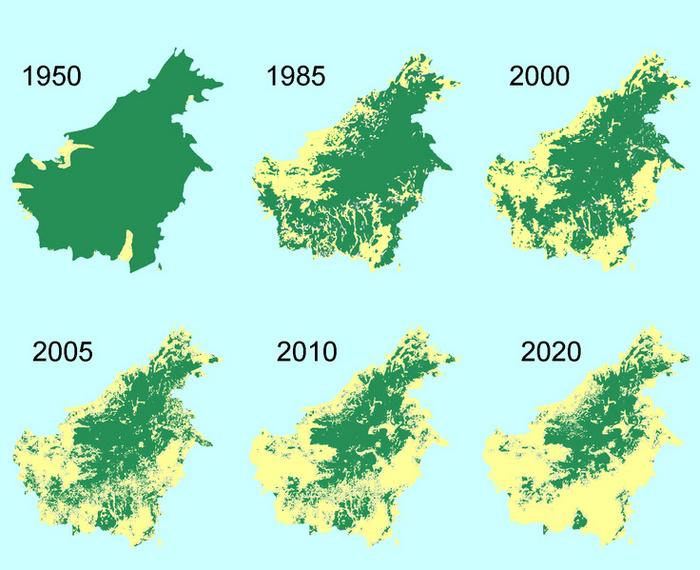 Asian rainforest map