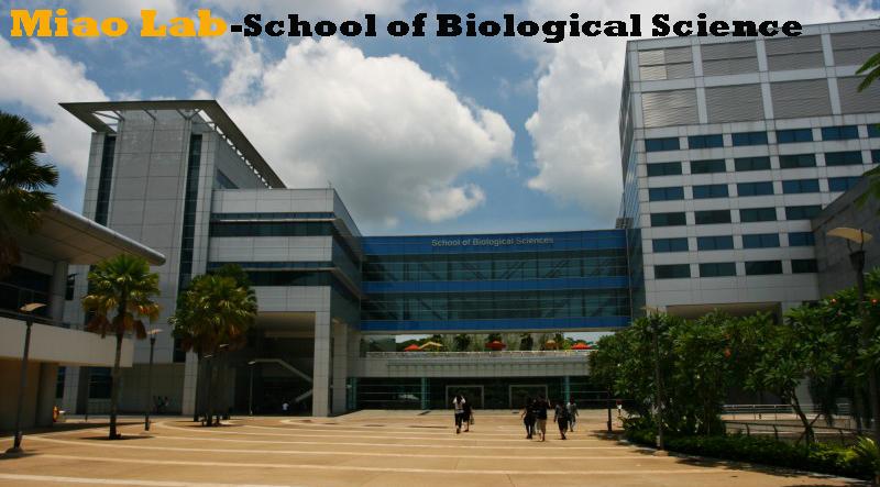 School of Biological sciences-Miao Lab