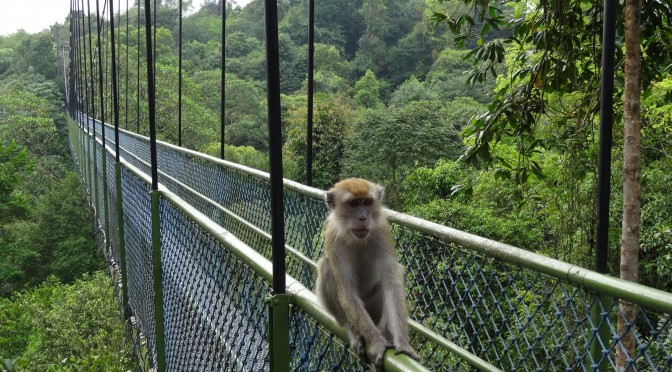 A walk in the park – Trek to the Macritchie reservoir park