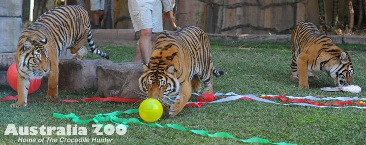 Australia Zoo Steve Irwin