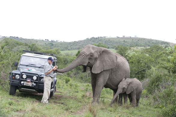 Taken from http://www.theguardian.com/environment/gallery/2009/feb/18/lawrence-anthony-elephant?index=11