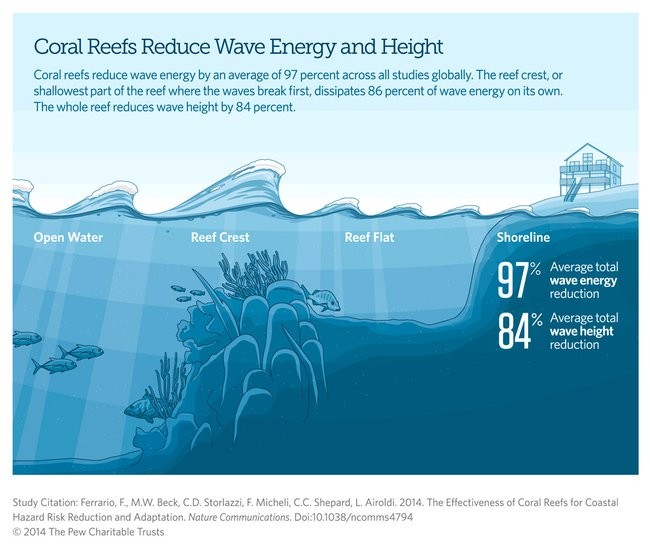 Coastal Protection Coral Reefs In The Philippines