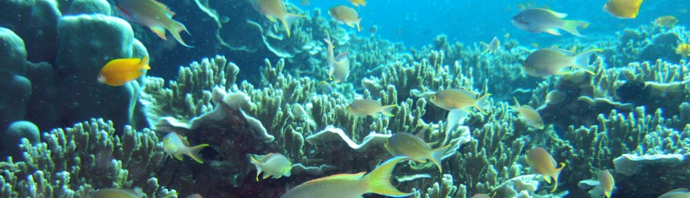 Coral Reefs in the Philippines