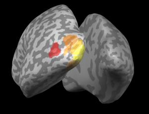 perception-brainscan