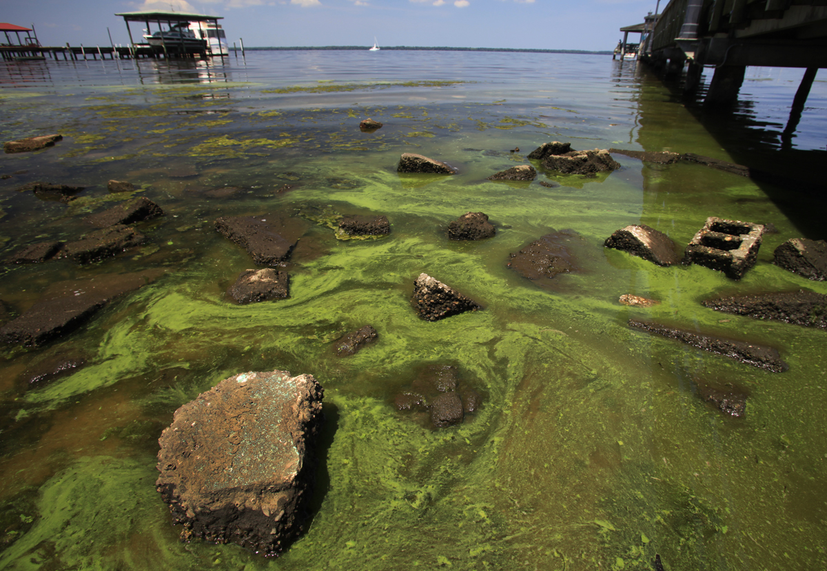 The effects of eutrophication in any body of water is sickeningly obvious. (http://www.stjohnsriverkeeper.org/issues)
