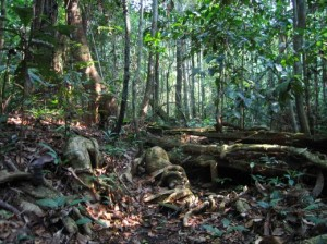 Dense_Jungle_StephenB_photos_09-04