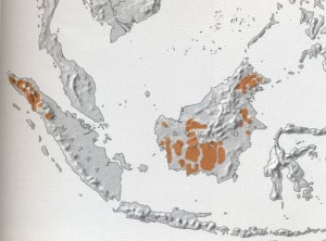 orangutan distribution map