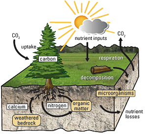 (image retrieved from: http://biology.about.com/od/ecology/ss/nutrient-cycle.htm )