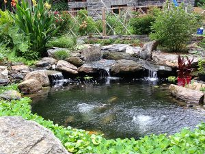 pond with waterfall and plants