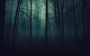 scary forest at night