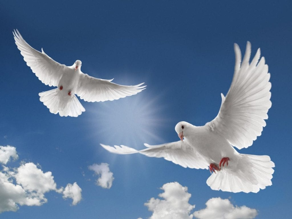 Doves flying in the sky