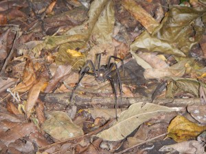 A giant spider that we found along the path