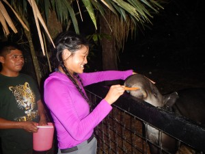 Feeding carrots to the national animal of Belize, the tapir