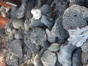 Coral graveyard