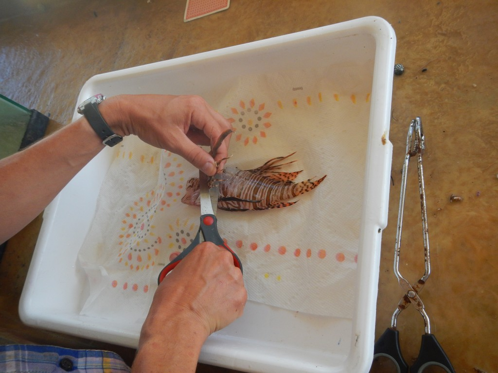 Dissecting the lionfish