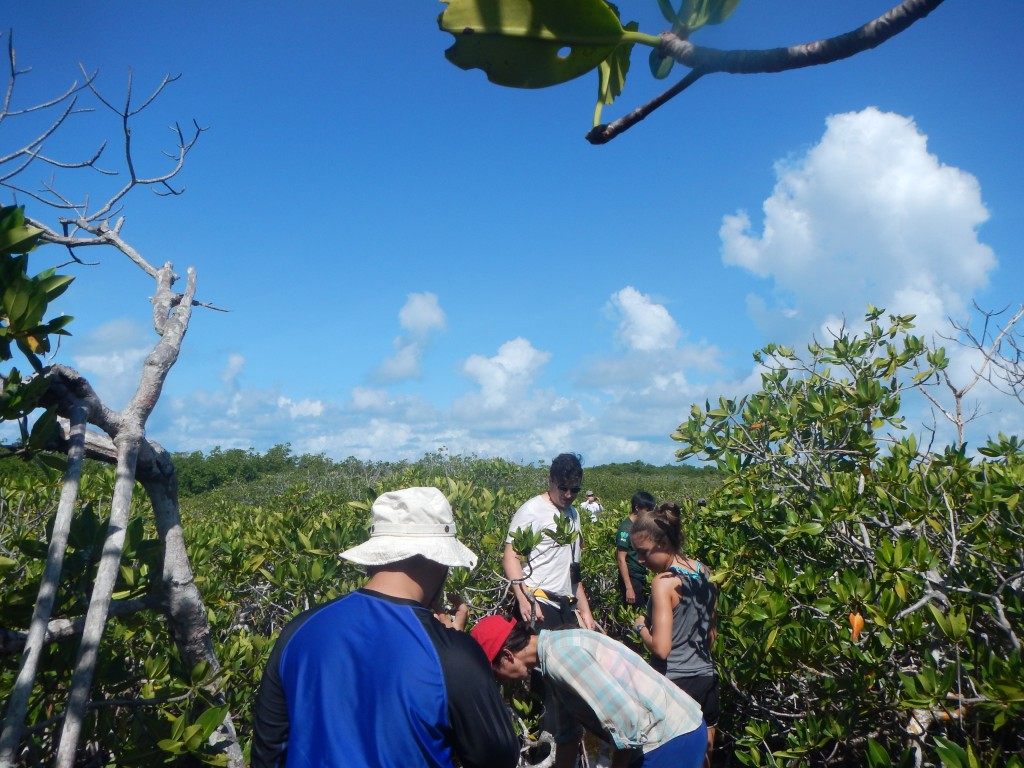 Making our way through mangroves