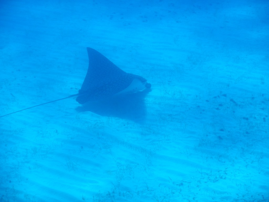The huge ray we saw