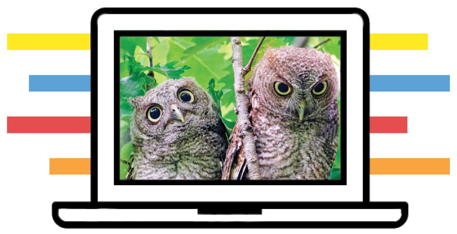 image of two owls on computer screen