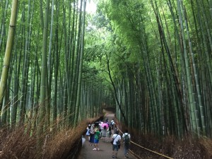 Surrounded by bamboo in the groves of Arashiyama. - Daniel Gilmore