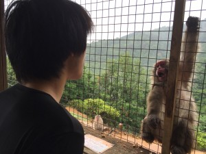 In Arashiyama, Donald learned to communicate with monkeys through lip smacking. This is what happens when there's a wall between you. When there's no wall, the monkey will charge at you and you will need to deflect it with your umbrella. - Daniel Gilmore