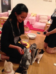 Hapineko Cat Café: Played with the cats while being served tea and biscuits