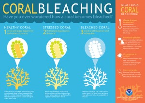 How Coral Bleaching Works