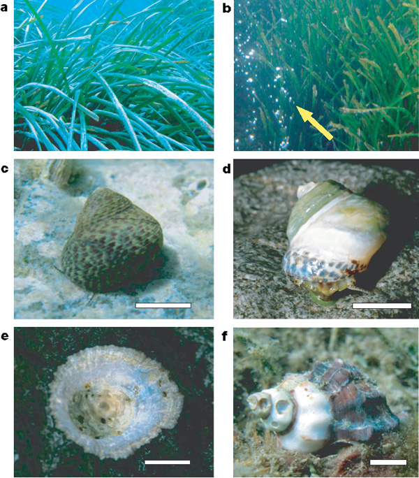 the effects of ocean acidification on coral reefs Some coral species can still successfully compete under ocean acidification conditions research into the multiple environmental factors affecting coral reefs and how these factors interact is bringing a greater understanding as to how these fragile ecosystems are likely to fare under increasingly acid ocean conditions.