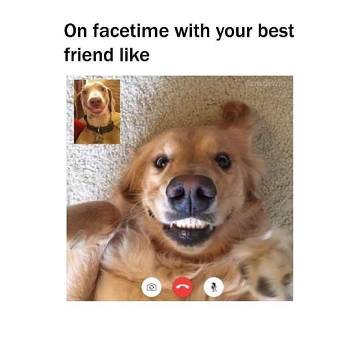 Dogs facetiming each other.