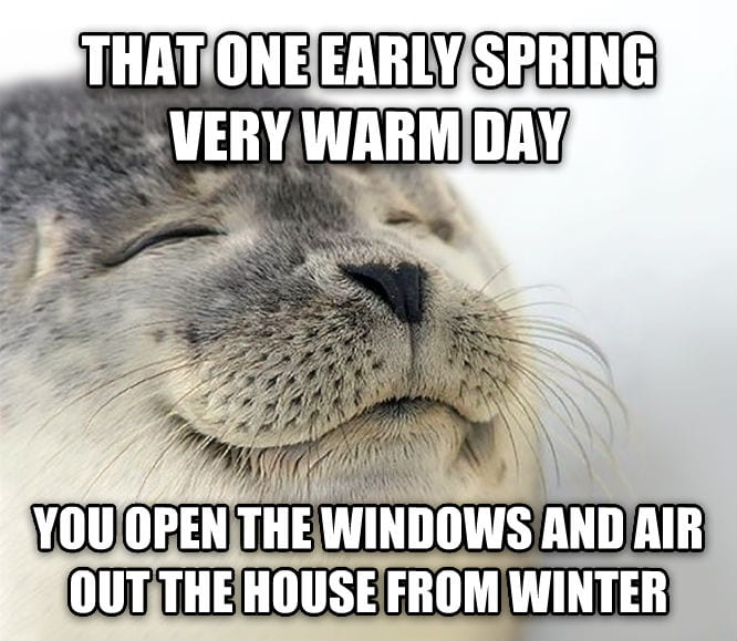 Happy seal enjoying sunlight.