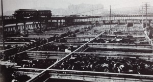 Stockyards around 1910. Chicago: Growth of a Metropolis (Chicago: University of Chicago Press, 1969)