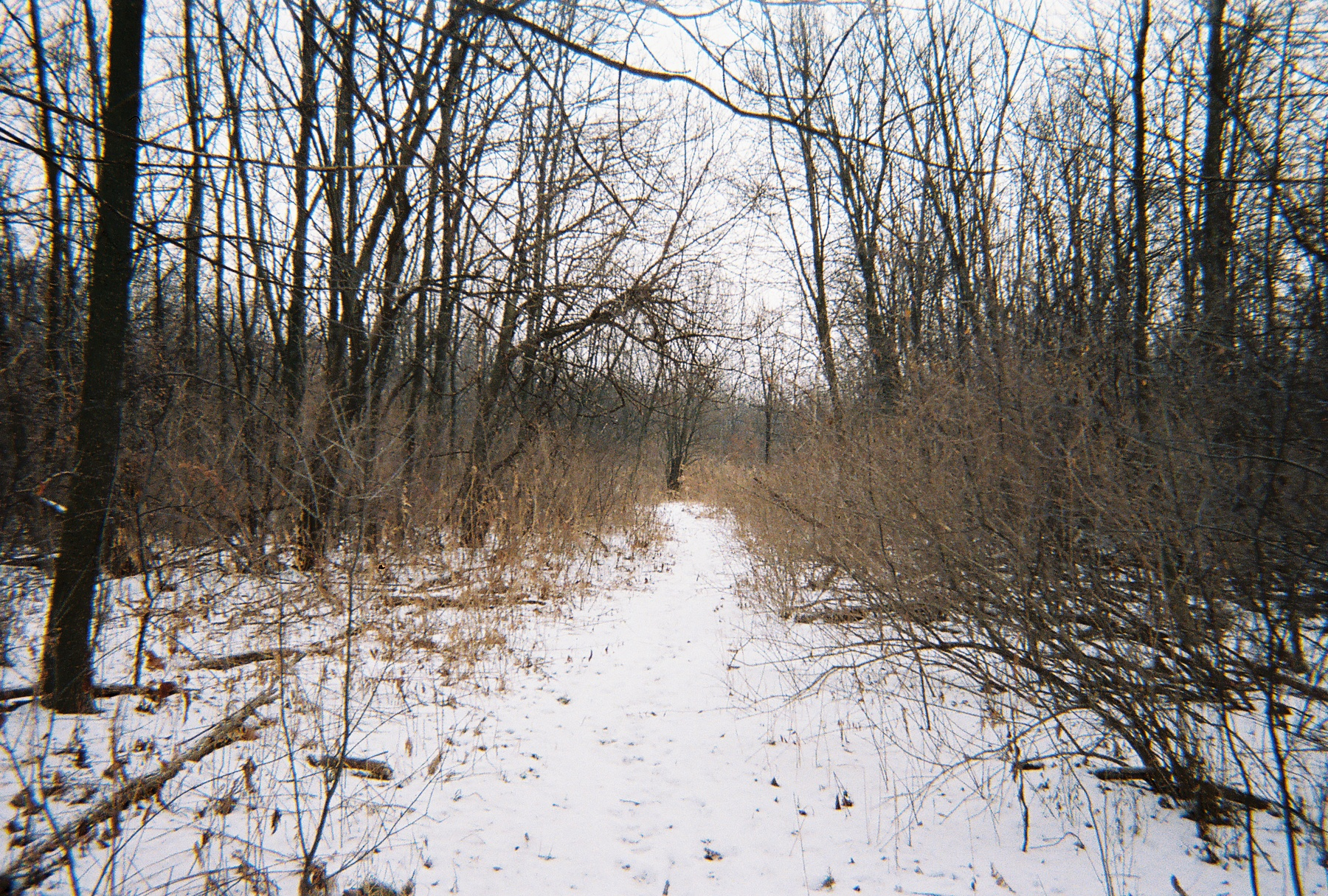 """The """"Development"""" of Teale Woods in Joliet: A Personal ..."""