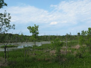 A marsh within the Calumet River watershed in the Indiana Dunes National Lakeshore