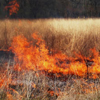 Prescribed burn (Will County Forest Preserve)