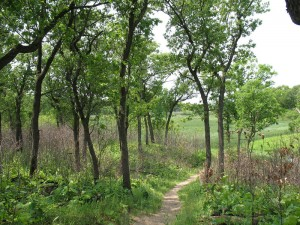 Trail through woodland and marsh in the Indiana Dunes National Lakeshore, 26 May 2012 (M. Bryson